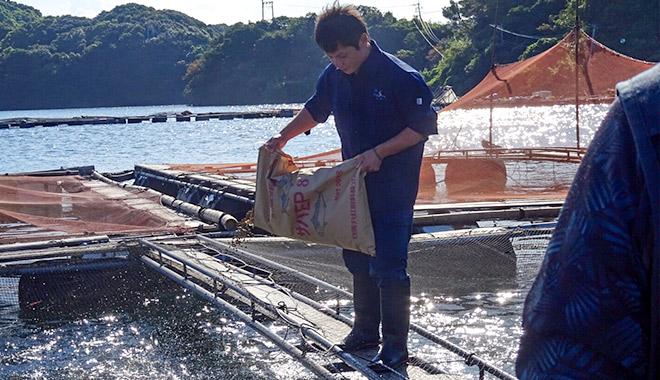 とらふぐが初めて成功した年と日本一の生産地